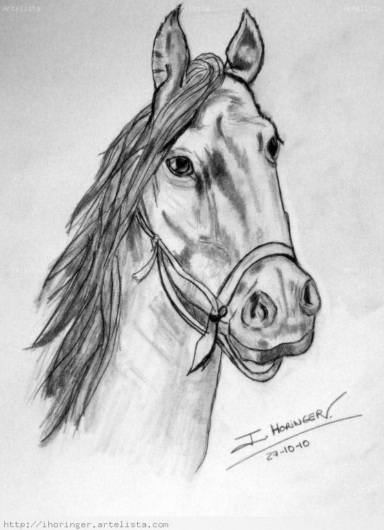 Cabezas de caballos para dibujar a lapiz - Imagui