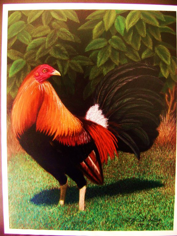 Dibujos gallos finos peleando  Imagui