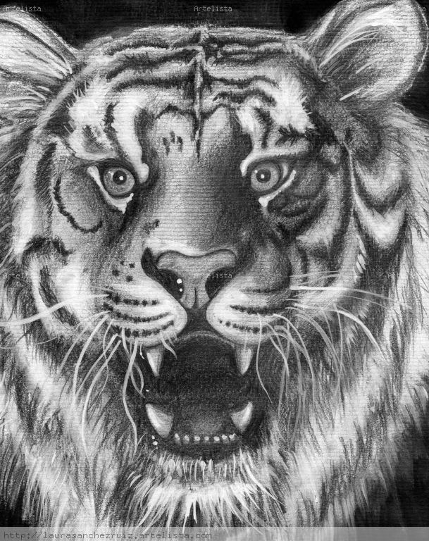 Caras de tigres para dibujar a lapiz  Imagui