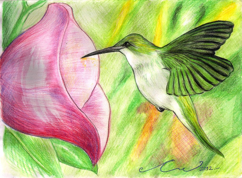 colibri Evelyn Orellana - Artelista.com