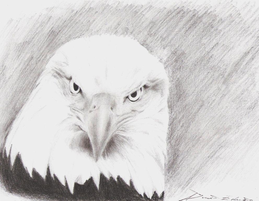 Dorable águila Calva Para Colorear Página Fácil Imagen - Dibujos ...