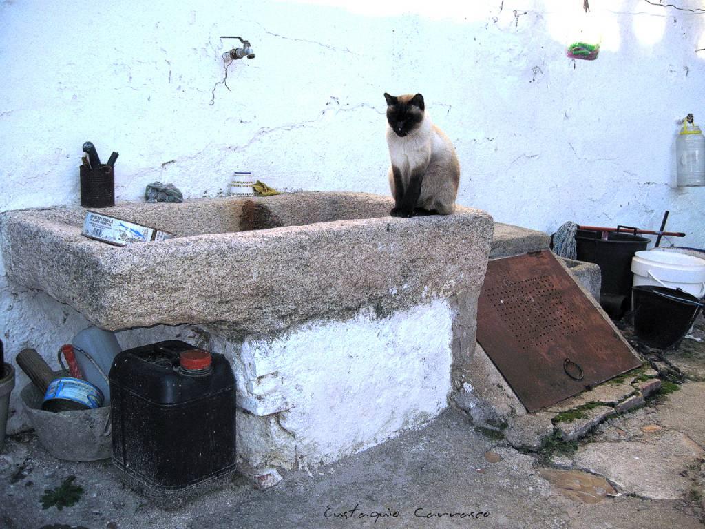 Gato encima de pila de lavar eustaquio carrasco carrasco for Pila de lavar