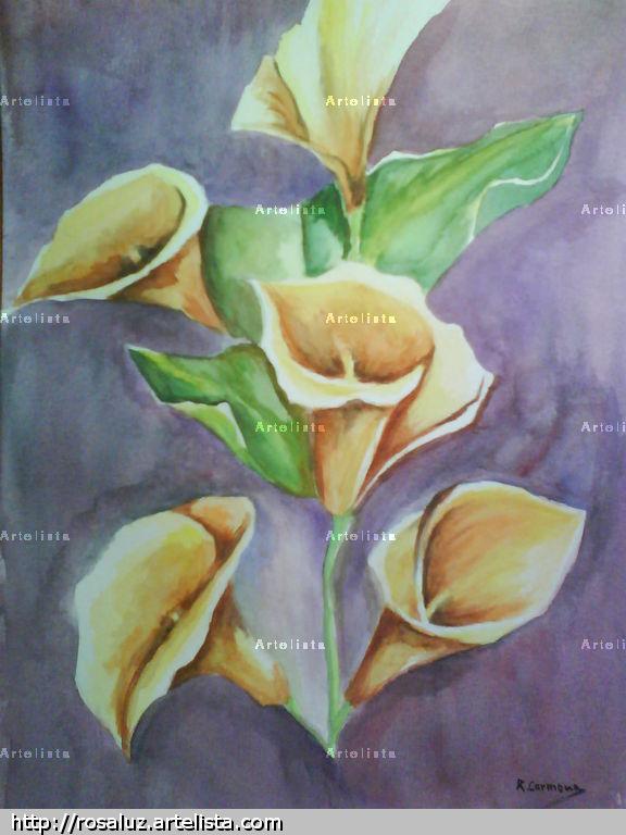 Calas Flores