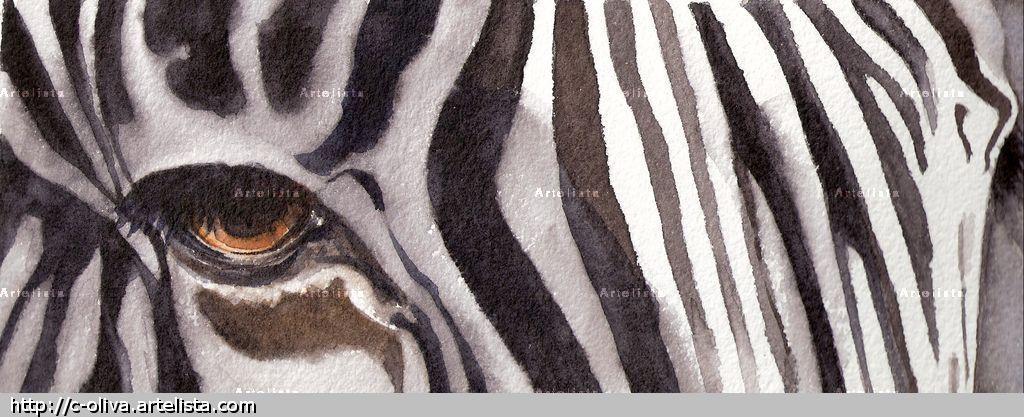 Pin pintar con acuarelas on pinterest - Cuadros de cebras ...