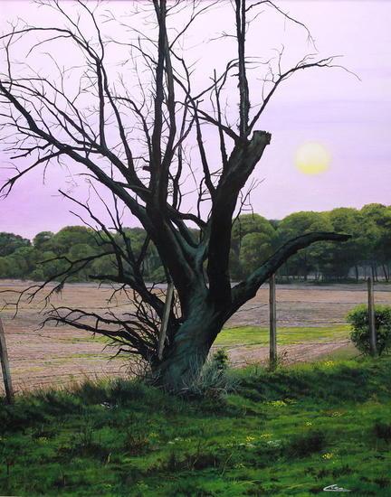 el árbol seco del pinar
