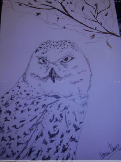 OWL Animales Cartulina Tinta