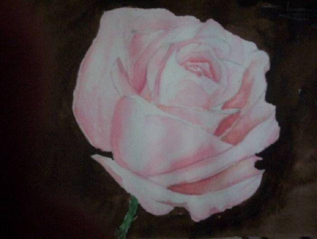 rosa Acuarela Cartulina Bodegones