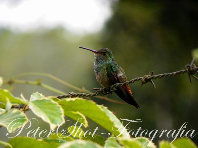 Pajarito en las montañas de Waslala - Nicaragua Naturaleza Color (Digital)