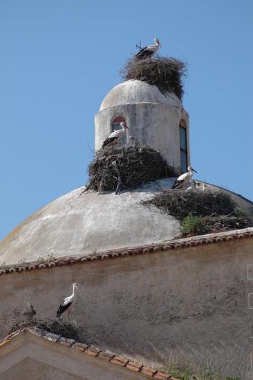 Cigueñas en la torre de la iglesia de Villamesías Color (Digital) Fotoperiodismo y documental