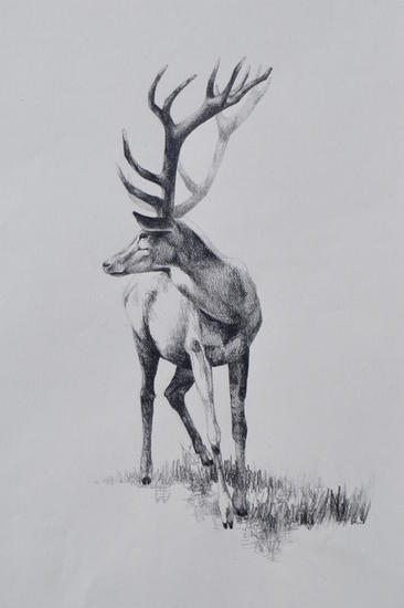 Ciervo Graphite Animals Paper