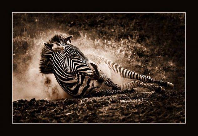Juegos de Cebra III Nature Color (Digital)