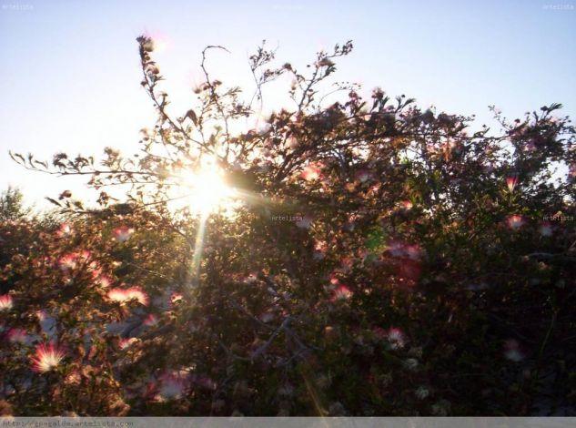 Plumerillo rosa Naturaleza Color (Digital)