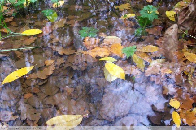 Reflejos Color (Digital) Naturaleza