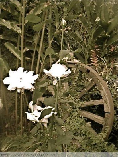 Rosas en Rueda Naturaleza Técnicas alternativas