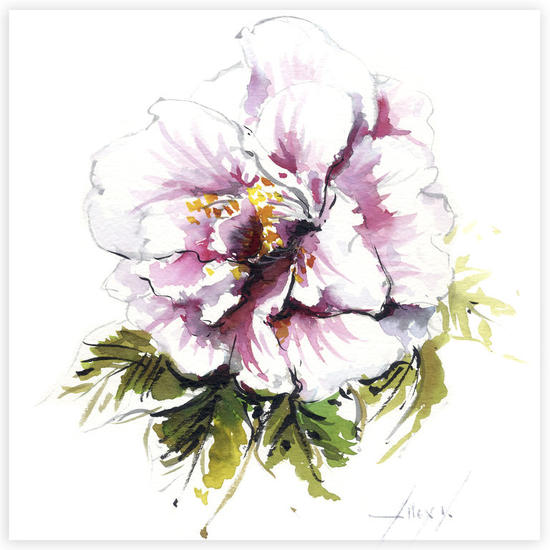 Camelia 20 Floral Tinta Cartulina