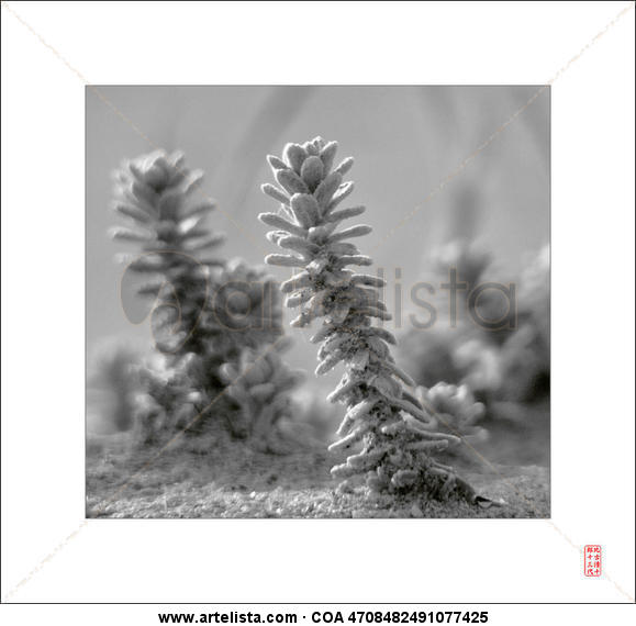 Dune plants Naturaleza Blanco y Negro (Digital)