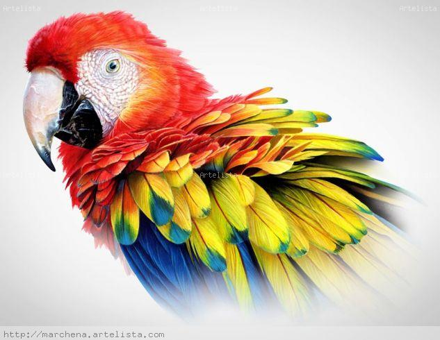 Scarlet Macaw Others Card Animals