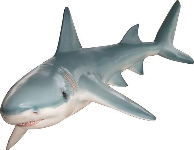 Tiburon Animales Otros Otros