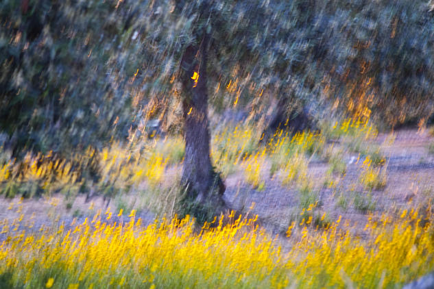Debajo de los olivos Color (Digital) Naturaleza