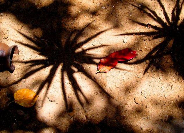 La magia de la tierra Naturaleza Color (Digital)