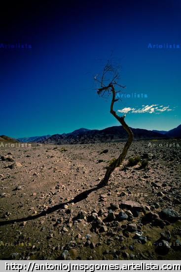 Abandono I Travel Color (Digital)