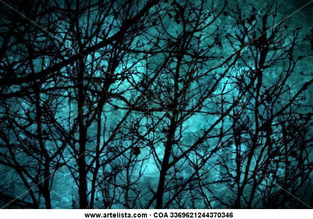 Bosque Encantado | Enchanted Forest Color (Digital) Naturaleza