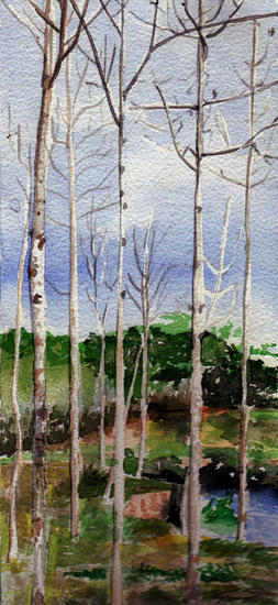 Bosque en Manabí Landscaping Watercolour Card