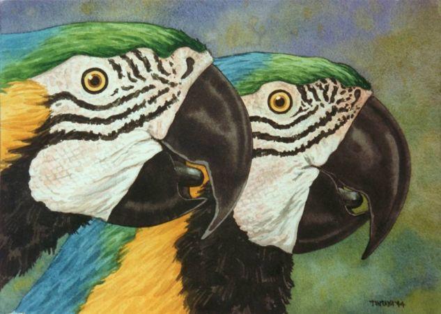 Paraba barba negra Card Watercolour Animals