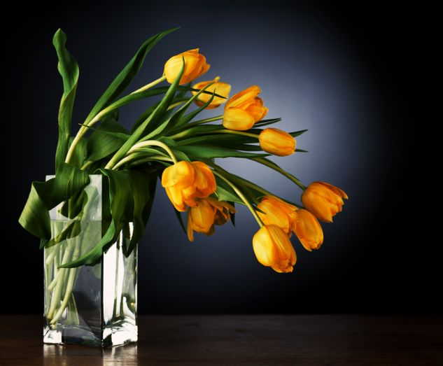 Tulipanes Still lifes Color (Digital)