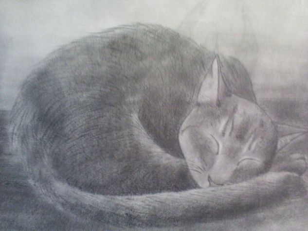 my cat ( mi gato) Carboncillo
