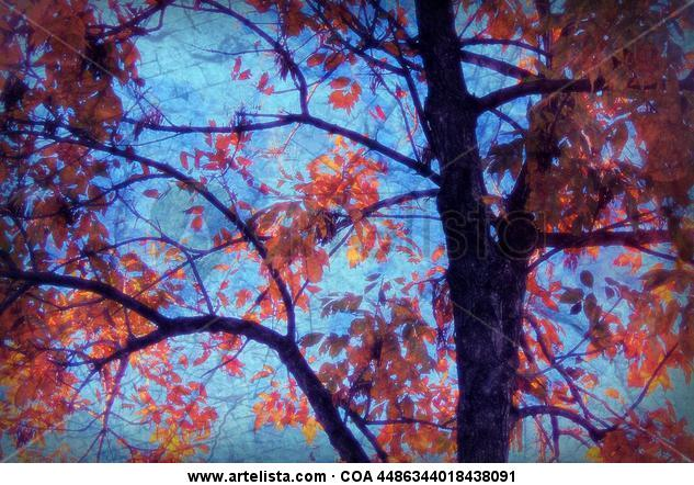 otoño | autumn
