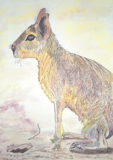 Mara patagonica Acuarela Papel Animales