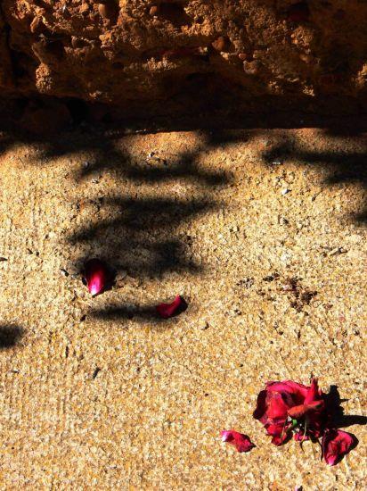 La rosa y la sombra Otras temáticas Color (Digital)