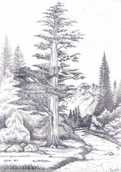 paisaje Carboncillo