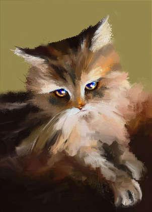 gato 33