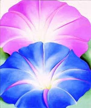 flores azul y rosa