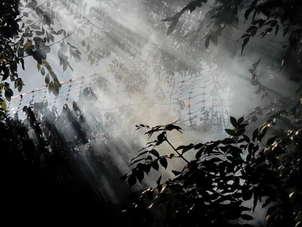 luz entre la niebla