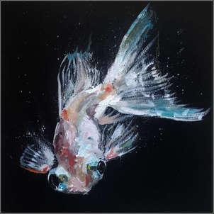 pez blanco