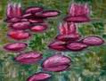 Waterlilies in spring time