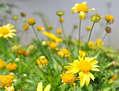 Floreciendo