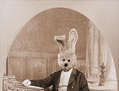 Lord Rabbit