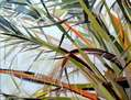 Ramas de palmera
