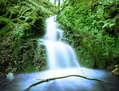 waterfall on forest (Cascada en el bosque)