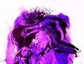 Danza violeta