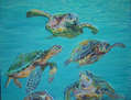 tortugas marinas (sea turtles)