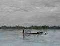 Pescadores, lago Inle en Birmania