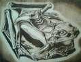 Rana de Escher