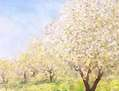 primaveras