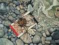 Frutos del Mar, Anexo 29