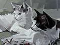 Gatos grises